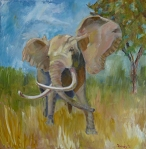 Cabela the Elephant, oil, 20 x20