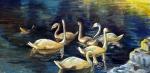 Swans,12x24,o/c